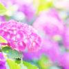 【オアシス青山】7月の耳つぼセラピーdays