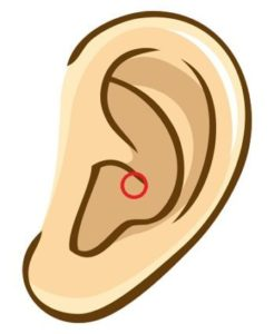 【耳つぼ】「胃」の耳つぼ